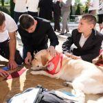 Проект совместно с Минской городской организацией Белорусского Общества Красного Креста «Доготерапия»